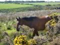 Irland_2013_6.JPG